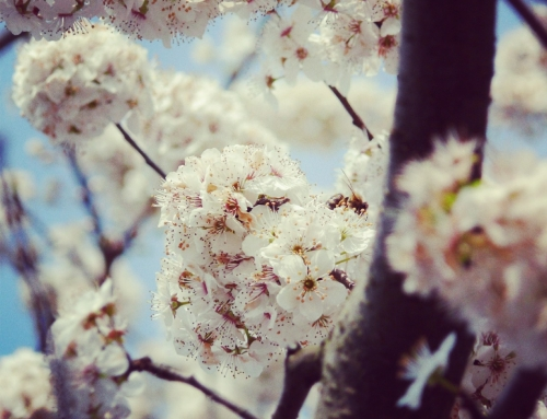 Spring – the rebirth of everything